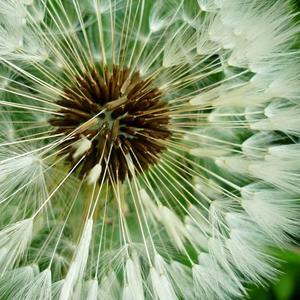 Калейдоскоп из семян