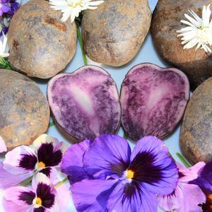 Необычный сорт - фиолетовый картофель