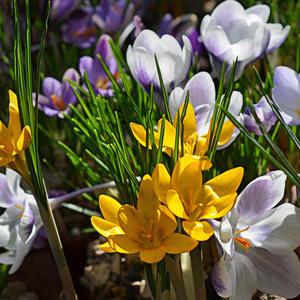Весна – это когда черно-белое становится цветным