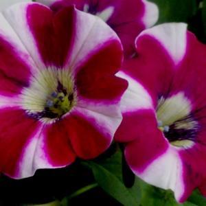 Цветы - удивительные создания природы