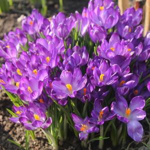 Фиолетовая весна.