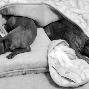 Галерея фотоизбушки: собаки