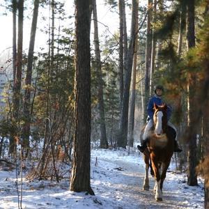 Верхом по зимнему лесу