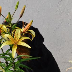 Какая женщина не любит цветов...
