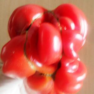 Сеньор -помидор