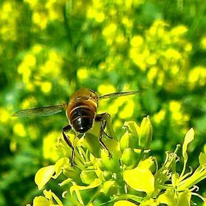 Дачные насекомые
