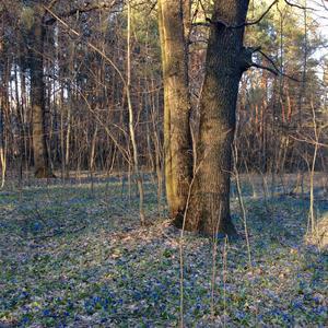 И к нам пришла весна