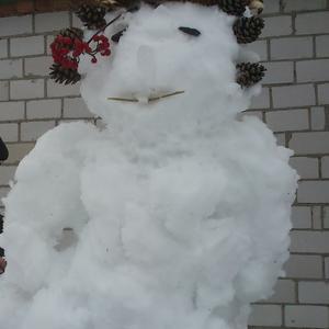 Снежная кокетка