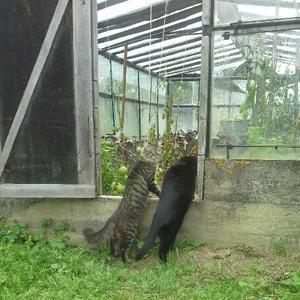Коты на даче