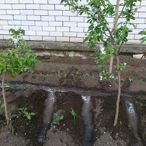 Мой сад и огород