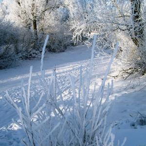 У зимы только белая краска