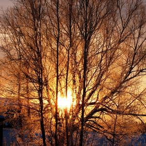 Тополиный пух, зима, мороз...