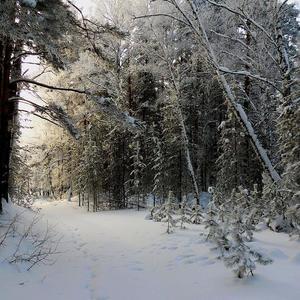 Зимней тропой после какого-то зверя иду к реке