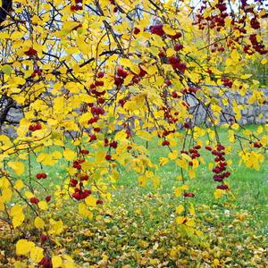 Осенний наряд