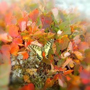 Последняя бабочка ушедшего лета
