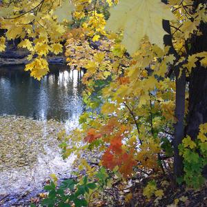 Осеннее многоцветье