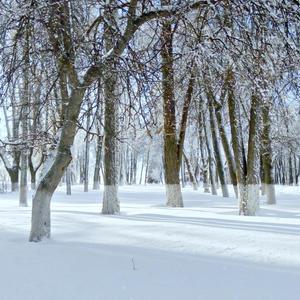 Белый, белый день))