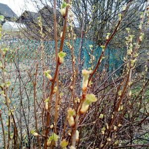 К нам весна идет маленькими шажочками. Новгородская область