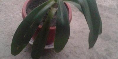 Как называется это растение? Как за ним ухаживать?