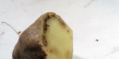 Что это за болезнь на картофеле?