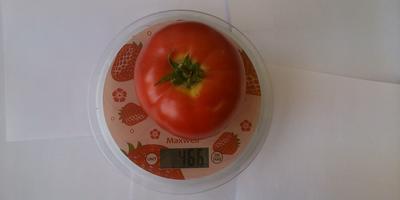 Первый опыт выращивания помидоров