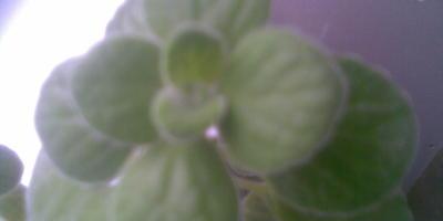 Подскажите название этого растения?