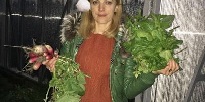 Новогодний урожай. Редиска и руккола. 31декабря:)