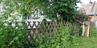 Цветы за забором
