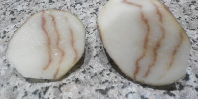 Подскажите, что за заболевание у картофеля?