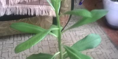 Как называется это цветок?