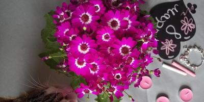Подскажите название цветка. Как за ним ухаживать?