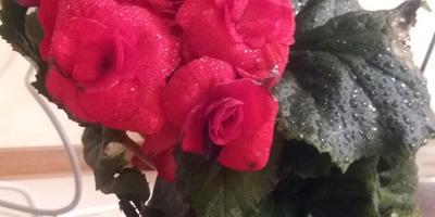 Помогите узнать, что это за цветок?