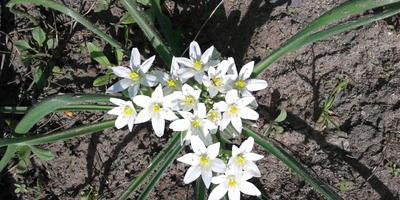 Хочу узнать, как называются эти цветы
