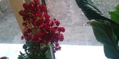 Хотелось бы узнать название вот этого красивого цветочка, чтобы правильно за ним ухаживать