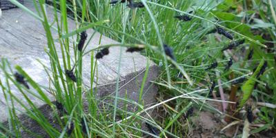 Помогите определить насекомых - вредителей и как с ними бороться
