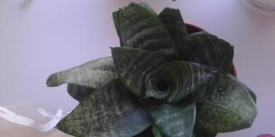 Что это за цветы и как за ними ухаживать?