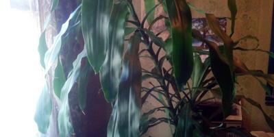 Пожалуйста, подскажите название растения, которое мне подарили