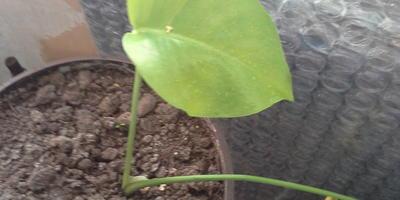 Как называется растение и как за ним ухаживать?