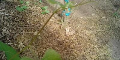 Выросло у меня в теплице вот такое растение. Что это?