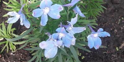 Подскажите, пожалуйста, название этого цветка