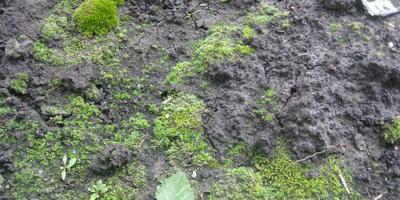 Почему земля стала покрываться зеленым мхом?