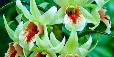 Подскажите названия растений