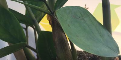 Подскажите название растения и правила ухода за ним