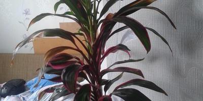 Помогите, пожалуйста, определить название цветка