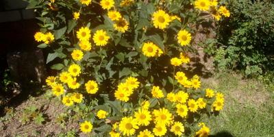 Подскажите, что за цветок и как его размножать?