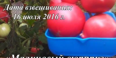 """Конкурс """"100 000 рублей за помидор"""""""