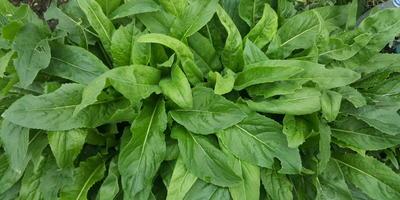 Помогите узнать название растения!