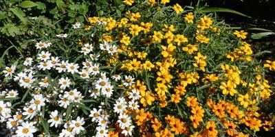 Помогите, пожалуйста, определить название этих цветов