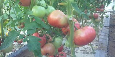 Как узнать имена участников конкурса «100 000 рублей за самый большой помидор», занявших с 4 по 10 места?