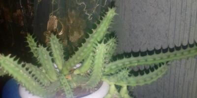 Подскажите названия кактусов. Как за ними ухаживать?